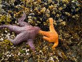 Starfish and Waves — Stockfoto