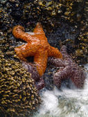 Starfish and the Tide — Stockfoto
