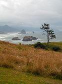 The Oregon Coast — Stock Photo