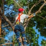 Arborist Trimming Down a Tree — Stock Photo #39986263