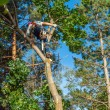 Arborist Trimming Down a Tree — Stock Photo #39986377
