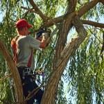 Arborist Trimming Down a Tree — Stock Photo #39986995