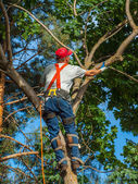 Arborist Trimming Down a Tree — Stock Photo