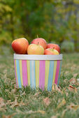 Apples in a colorful basket — Stock Photo
