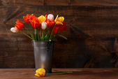 Silver pail of tulips — Stock Photo