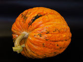 Pumpkin Cucurbita maxima ´Helloween´ — Stock Photo