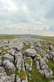 Yorkshire moor — Stockfoto