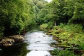 River Wharfe near strid — Stock Photo