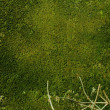 Stock Photo: Mossy wall