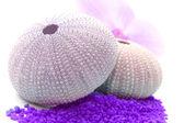 Mořský ježek — Stock fotografie