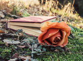 Book and rose — Stock Photo