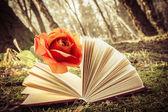 书和玫瑰 — 图库照片