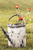 Garden pot with roses — Foto Stock