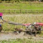 Cambodian farmer — Stock Photo #11790604