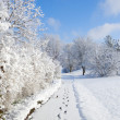 Snowy Walkway — Stock Photo