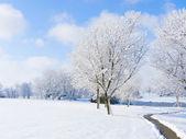 Park in Snow — Stock Photo