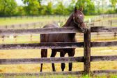 Horse on a farm — Stock Photo