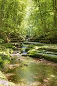 поток в лесу — Стоковое фото