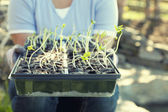 Planting season — Stock Photo