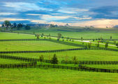 Horse country — Stockfoto