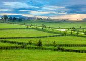 Paardenland — Stockfoto