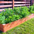 Vegetable garden — Stock Photo #23908439