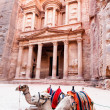 Stock Photo: Camels of Petra