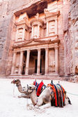 Camels of Petra — Stock Photo