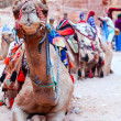 Camel of Petra - Foto Stock