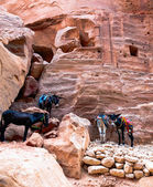 Donkeys at Petra — ストック写真