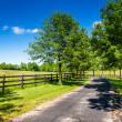 Country road — Foto Stock
