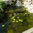 Stock Video: Koi Pond