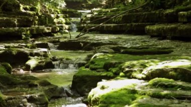 Stream in the forest — Wideo stockowe