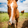 Horse up close — Stock Photo