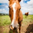 Horse up close — Stok fotoğraf