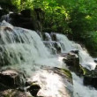 Forest creek and waterfall — Stok video