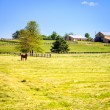 Horse farm — Stock Photo #29587161