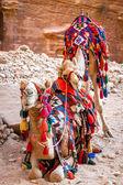 Camelos em petra — Fotografia Stock