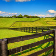 Stock Photo: Horse farm fences