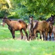 Horses on the farm — Stock Video