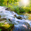 Forest stream and waterfall — Stock Photo