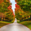Stock Photo: Horse farm alley