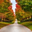 Horse farm alley — Stock Photo