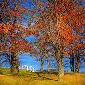 Beyaz at çiftliği çit — Stok fotoğraf