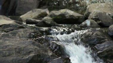 Orzeł spada — Wideo stockowe
