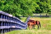Mother horse is feeding foal — Stock Photo