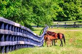 Matka konia jest żywienie źrebiąt — Zdjęcie stockowe