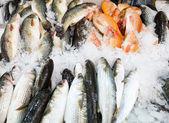 Fish at the market — Stock Photo