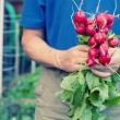 Gardener holding radishes — Stock Photo #45134717