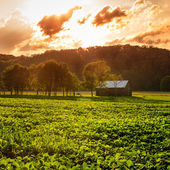 Evening scene in rural Kentucky — Stock Photo